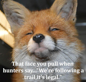 National Treasures Call On National Trust To Ban Hunting On Its Land